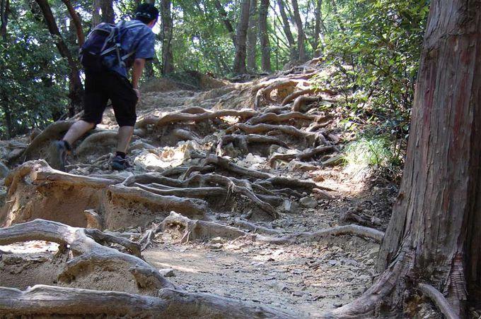 木の根っこをよじ登り、上へ上へ!