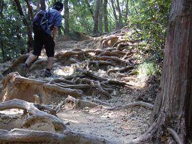 心と体をリセット!高尾山の登山「稲荷山コース」