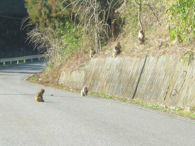 田舎道ならでは!お猿さんが道を横断します。
