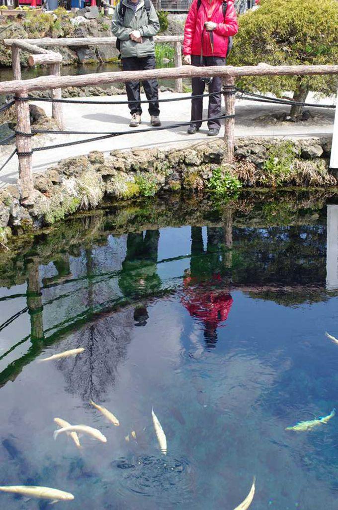 吸い込まれそうな幻想的な青い色の池!