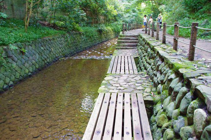 谷中川沿い役1kmをゆっくり歩いて、マイナスイオンを浴びます
