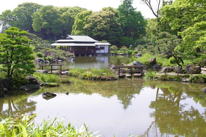 広々とした緑の池!清澄庭園の中心的存在「泉水」