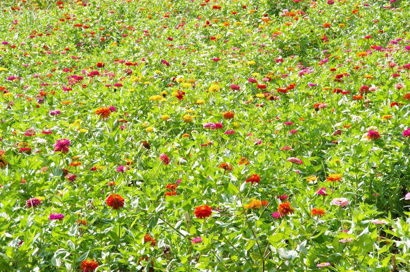 郷土資料館の前にあるのは、季節の花が咲く「花の里」