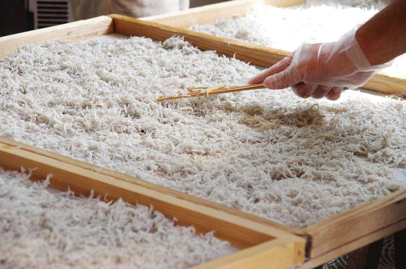 今朝獲れの超新鮮な湘南しらすを探す旅。鎌倉「喜楽丸」