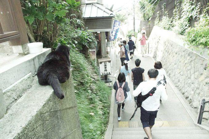 10.江ノ島の猫