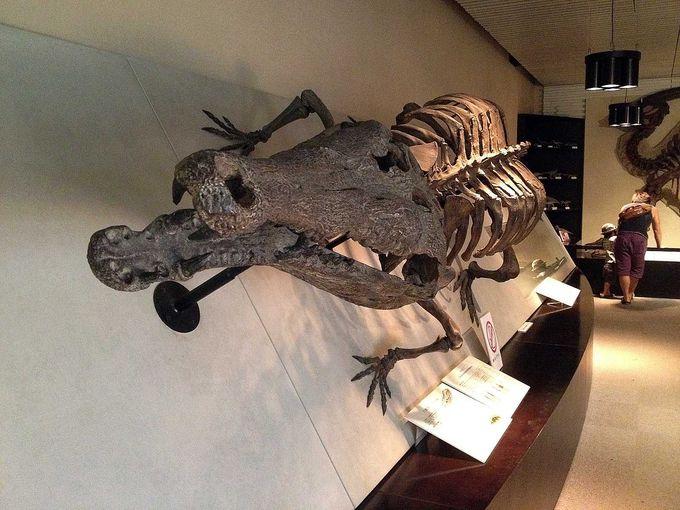 食べられちゃいそう!全長7m 巨大なワニの骨格標本