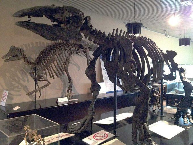 世界最初の恐竜復元骨格標本「デスモスチルス」