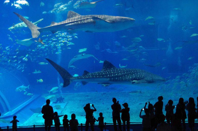 雨の日もOK♪沖縄  人気No.1観光スポット「美ら海水族館」