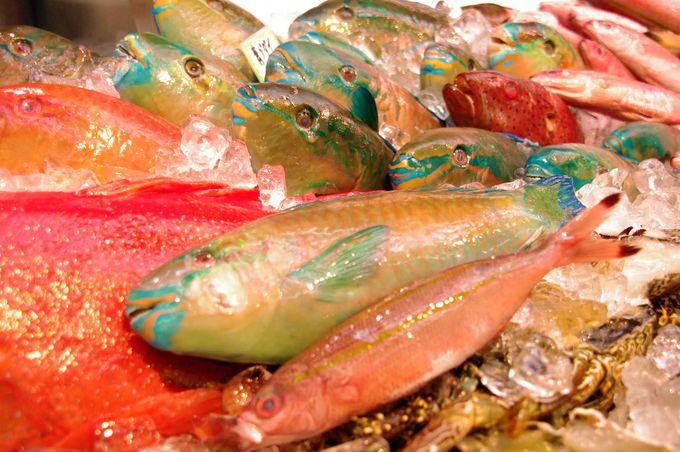 沖縄ならではのカラフルな魚たち