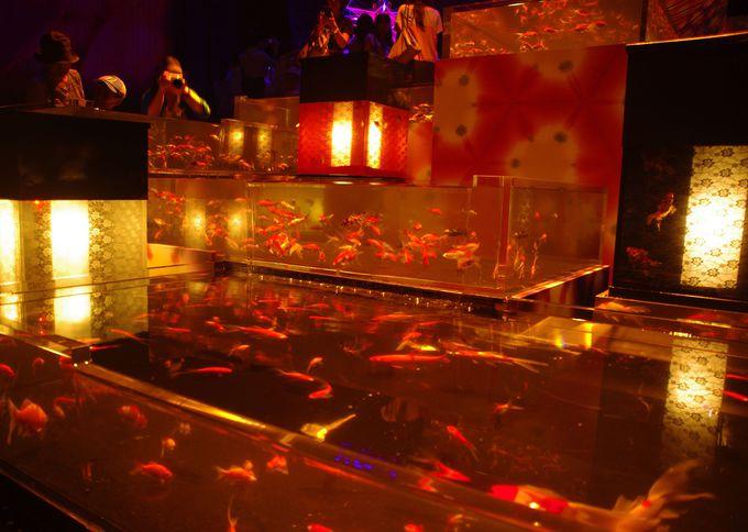 スイスイ泳ぐ金魚がた〜くさん!川の流れを表現した「華魚繚乱」