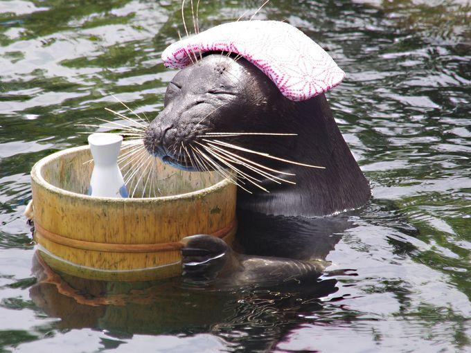 いい湯だな〜 いい湯だな〜 ここは箱根、水族館の湯♪