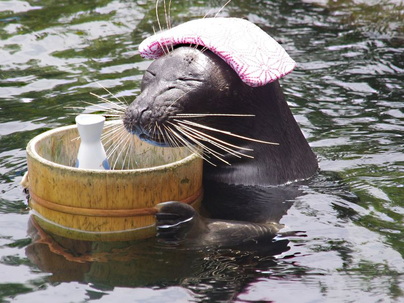"""ゆっる〜い芸で話題沸騰!!日本で唯一、温泉アザラシ""""ビリー""""が見られる「箱根水族館」【神奈川】"""