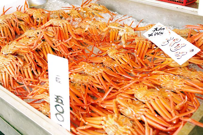 魚のアメ横「寺泊市場」で新鮮な魚介類に大満足!