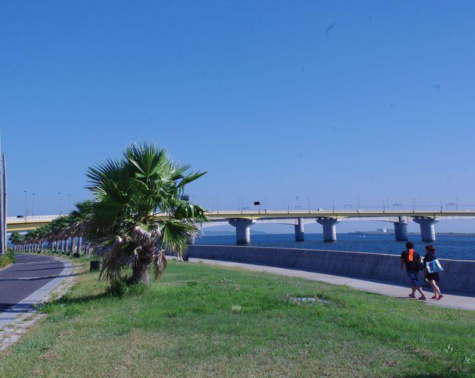 昼は、椰子の木が並ぶ遊歩道をお散歩。釣りもバーベキューも出来ます!