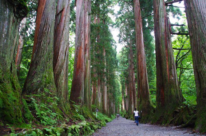 戸隠神社のシンボルにもなっている、奥社参道の杉並木!