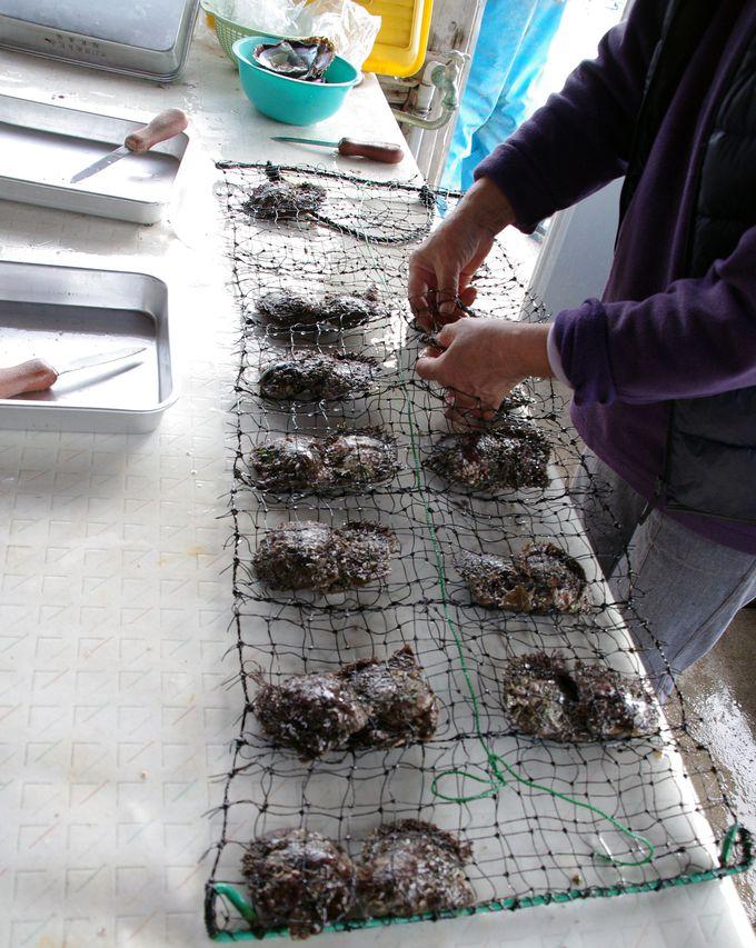 【真珠取り出し体験1】真珠をGetするには、まずアコヤ貝選びから