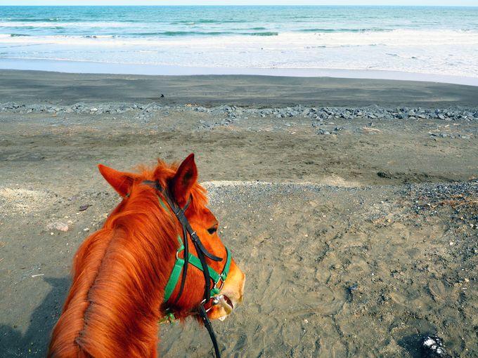 馬から見下ろす九十九里浜の海に感動!