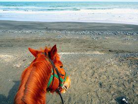 BGMは九十九里浜の波音!一宮乗馬センターで癒しの海岸乗馬