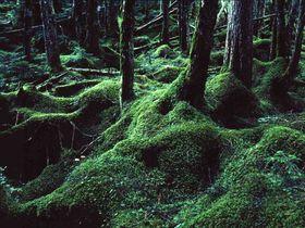 まるでジブリの世界!長野北八ヶ岳・白駒池周辺「苔の森」