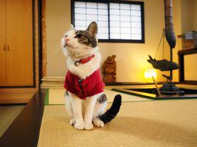 看板ネコがおもてなし!心癒す極上の湯宿〜草津温泉・中村屋旅館