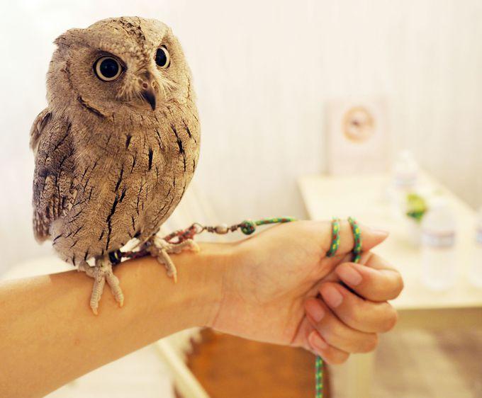 フクロウを直接腕に乗せてみよう