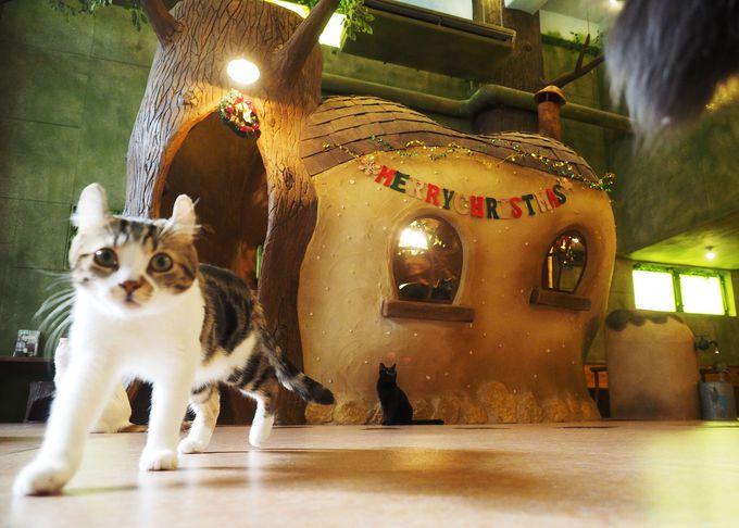 """猫カフェ「てまりのおうち」。コンセプトは""""猫たちが作った不思議な森"""""""