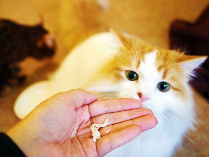 もっと猫と仲良くなりたい時は、猫のおやつでアイドル気分に♪