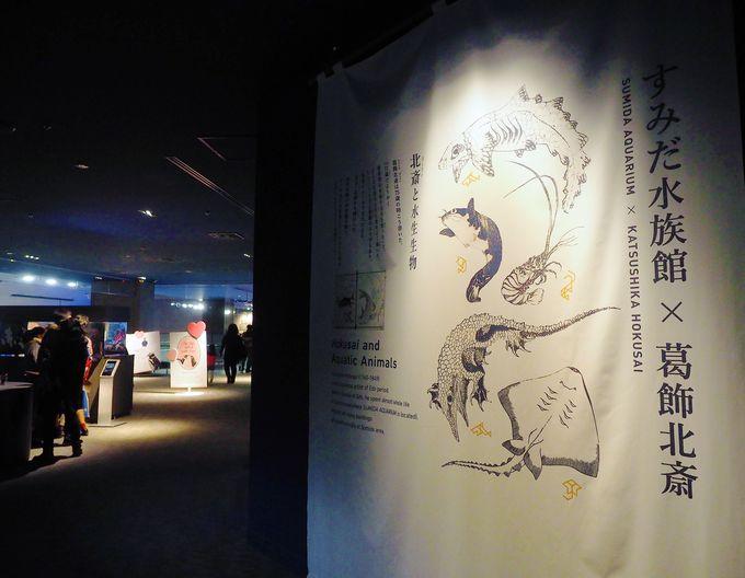 江戸時代の天才絵師 葛飾北斎と生物の意外な関係