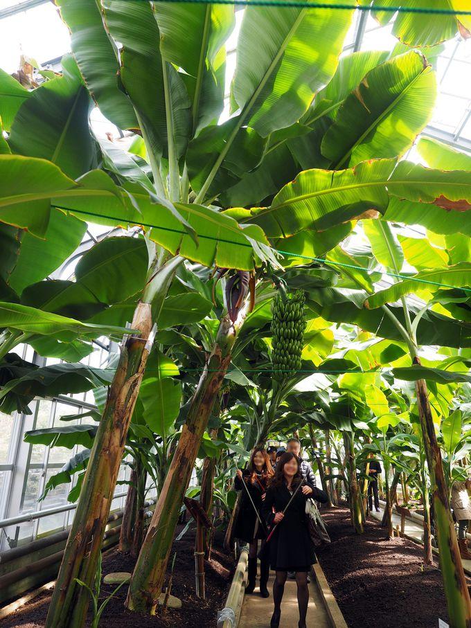 まるでジャングル!興奮度抜群「熱川バナナワニ園」