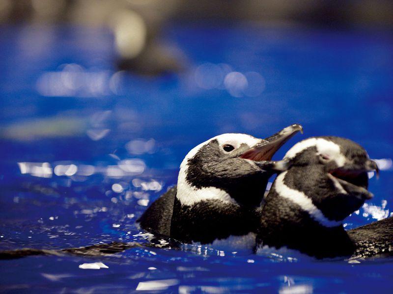 """まるで昼ドラ!すみだ水族館の""""恋するペンギン""""が巻き起こす事件が面白い!"""