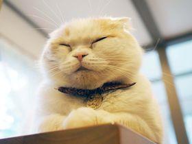 わっ…癒される!白馬「プチホテル アニスガーデン」のモフ猫 大吉さんに夢中!!