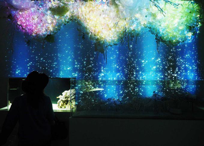 花×魚×プロジェクションマッピングが融合した美空間