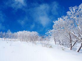 雲海テラスが冬だけ「霧氷テラス」に!北海道トマムの霧氷でできた美しい冬景色