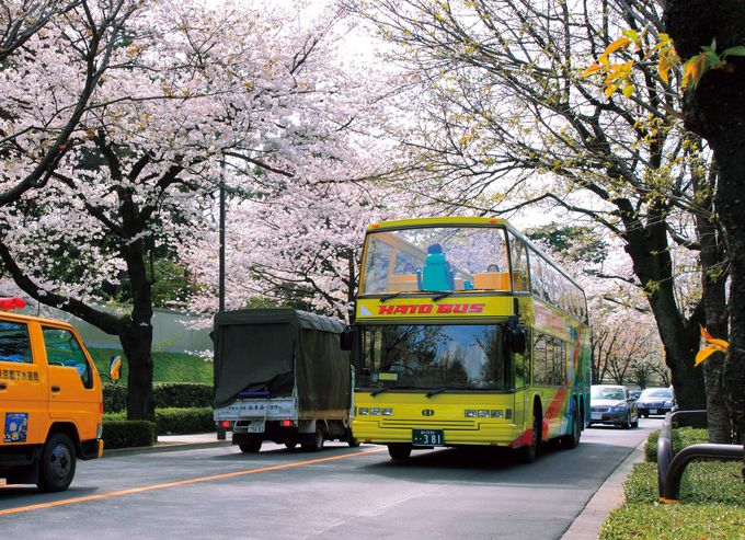 都内のお花見スポットを効率よく回る「東京さくら回廊」