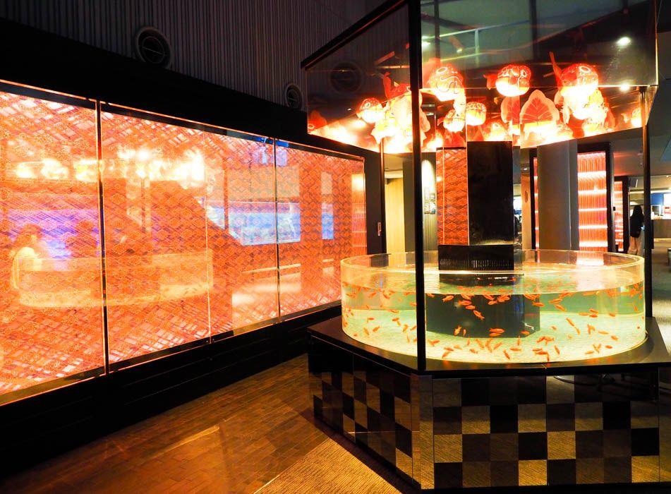青森ねぶた職人が作った金魚提灯と金魚の群れがコラボ