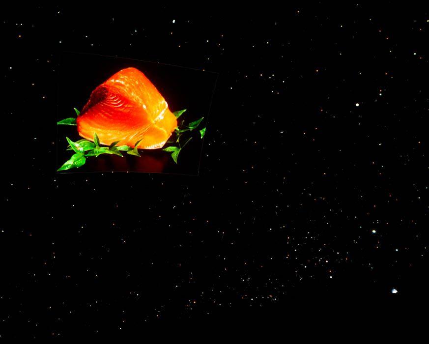 夜空にマグロが!!漁師気分で楽しむ焼津のプラネタリウム