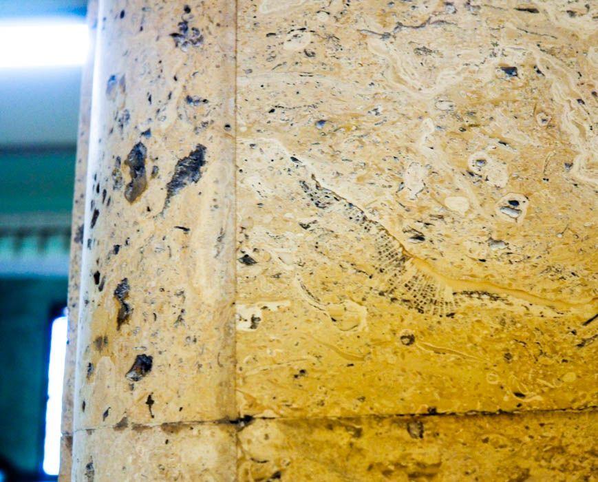 静岡市役所(本館)で化石を探せ!