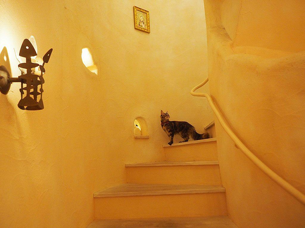 猫カフェ「てまりのおしろ」の楽しみ方&注意点