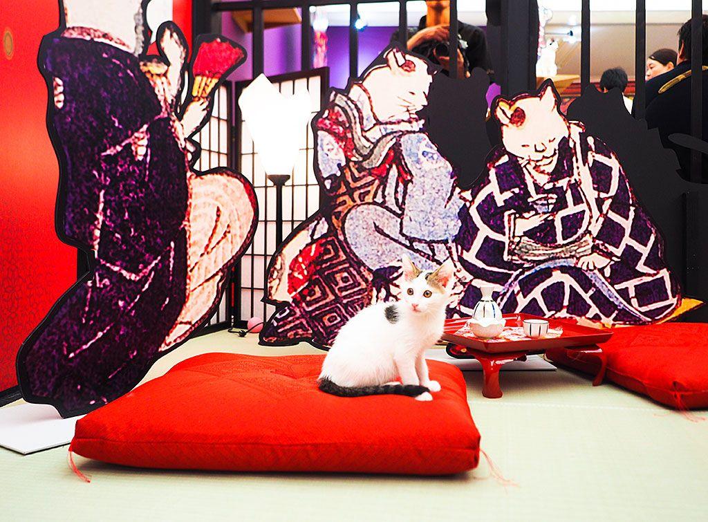 猫たちと一緒に遊ぶなら「ねこ遊郭」コーナーへ