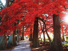 信州の美もみじ寺!長野「長円寺」心に響く鮮烈な紅葉トンネル