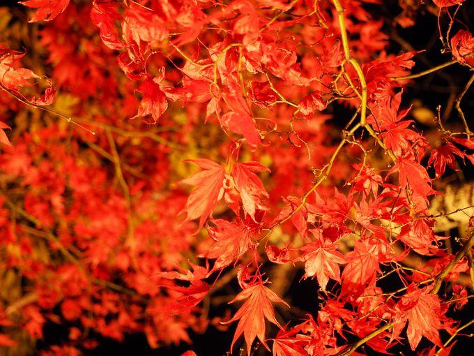 「長円寺」のライトアップは夜9時まで
