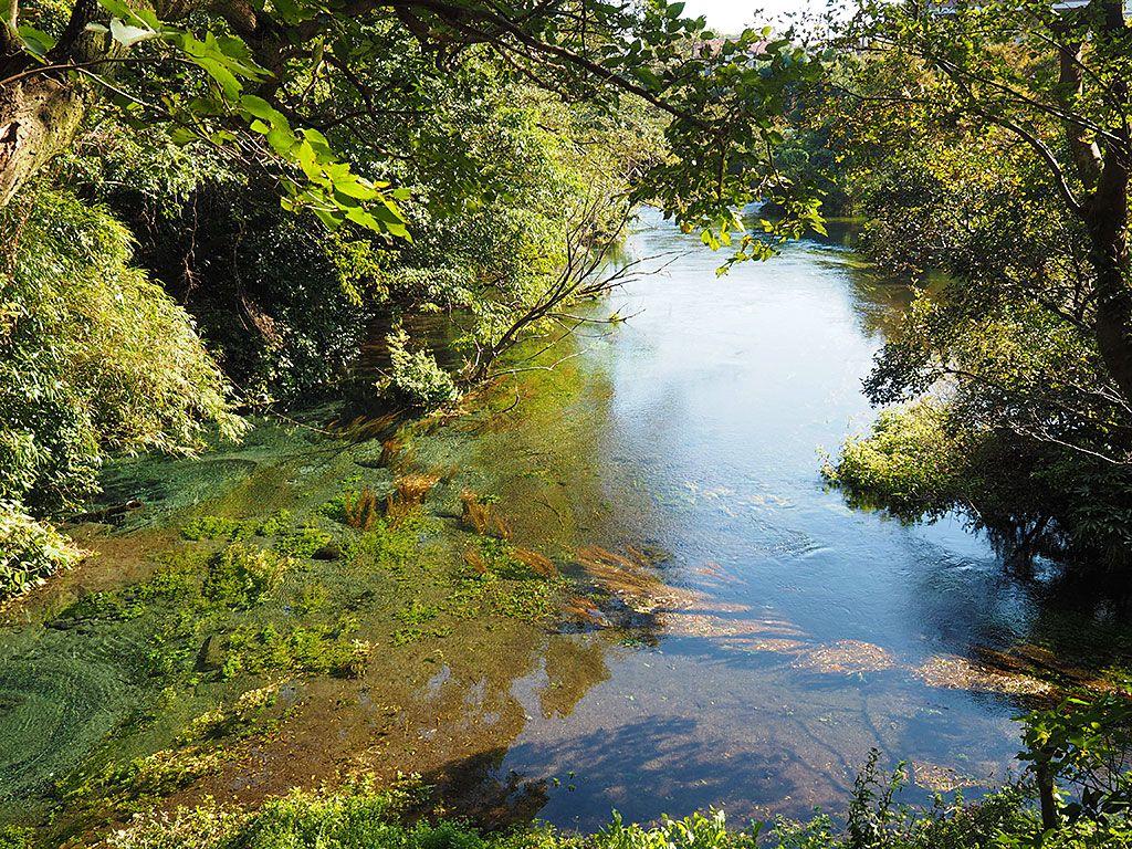 柿田川の源を見られる、第1展望台