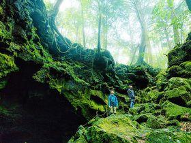パワースポット超え!?富士の樹海と竜宮洞穴を巡るツアーで癒し観光