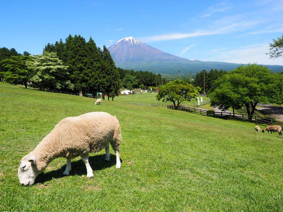 モコモコの羊さんたちと仲良くなれる「まかいの牧場(静岡)」