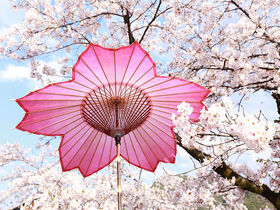 パッと花咲く和傘の桜!「和傘CASA」モダン岐阜和傘の世界