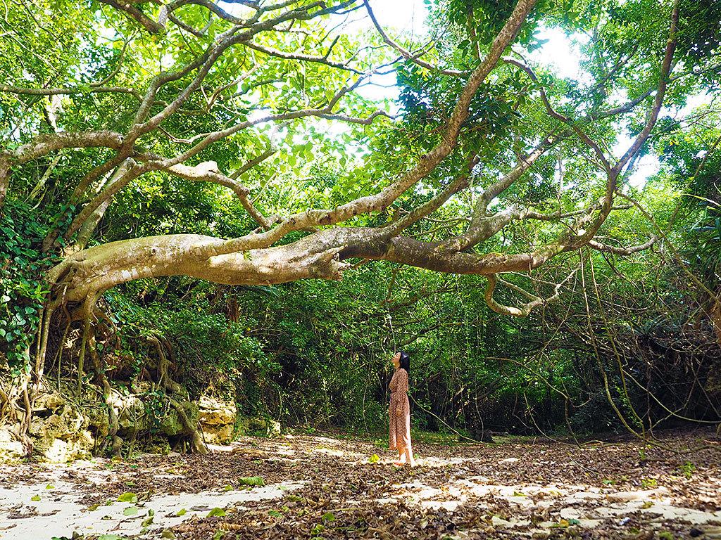 知られざる楽園、沖永良部島へ!奄美の隠れ名島で叶える5つのコト