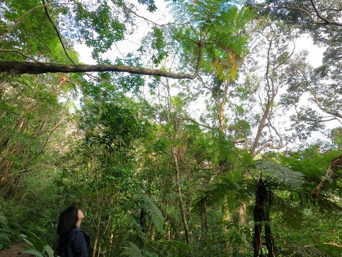 着いたのは、本物のジャングル