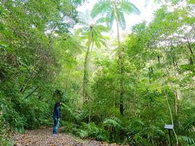 ジュラ紀に迷い込む?奄美大島「金作原」原生林トレッキングツアー