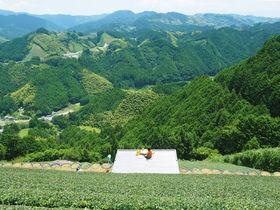 天空の茶園に茶の間が!静岡「豊好園」完全予約制の絶景ティータイム