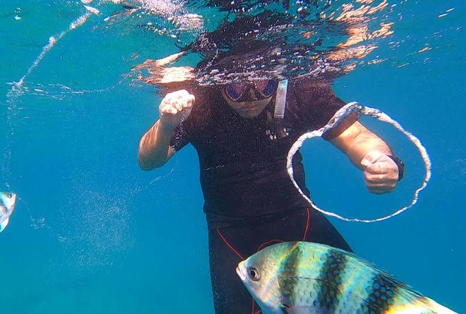 青い光に包まれる、新感覚の水中体験